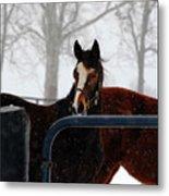 Horse In A Snowstorm Metal Print