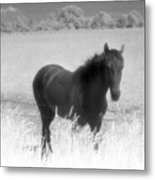 Horse In A Summer Dreamfield  Metal Print
