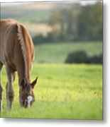 Horse In Field Near Ballyvaloo, Blackwater, Wexford Metal Print