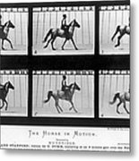 Horse In Motion, 1878 Metal Print