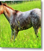 Horse In Pasture Field Metal Print by Thomas R Fletcher