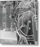 Horse In The Quarter Metal Print
