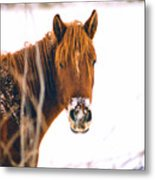 Horse In Winter Metal Print
