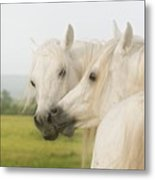 Horse Kiss Metal Print
