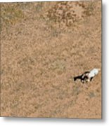 Horse On Canyon Floor Metal Print