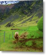 Horse On The South Iceland Coast Metal Print