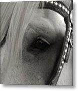 Horse Patience Metal Print