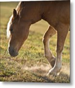 Horse Pawing In Pasture Metal Print by Steve Gadomski