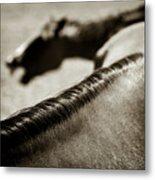 Horse Play Metal Print