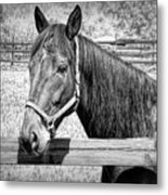 Horse Portrait In Black And White Metal Print