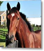 Horse Profile Metal Print