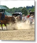 Horse Pull In St Stephen Nb Metal Print