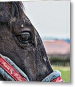 Horse Riding Horse Metal Print