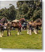 Horse Show Metal Print