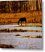 Horse Silhouetted Metal Print