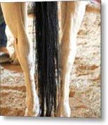 Horse Tail. Metal Print