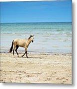 Horse Walking On Beach Metal Print by Vitor Groba
