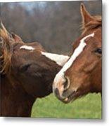 Horse Whisperer Metal Print by Mamie Thornbrue