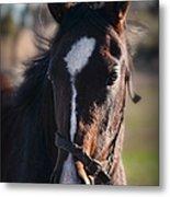 Horse Whispering Metal Print