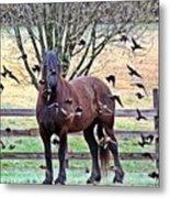 Horsebirds Metal Print