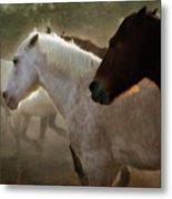 Horses-02 Metal Print