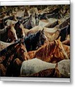 Horses 29 Metal Print