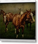 Horses 31 Metal Print