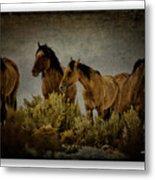 Horses 34 Metal Print