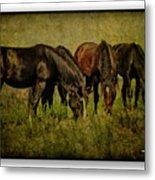 Horses 37 Metal Print