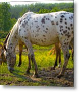 Horses And Buttercups Metal Print