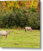 Horses Enjoying A Beautiful Autumn Day Metal Print