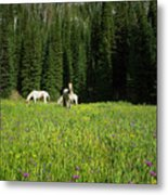 Horses Getting A Break Metal Print