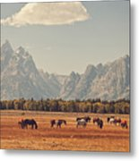 Horses Grazing In Front Of The Teton's Metal Print