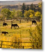 Horses Grazing In The Late Afternoon Metal Print