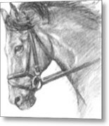 Horse's Head With Bridle Metal Print