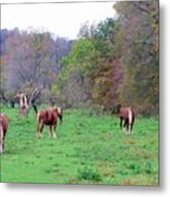 Horses In Autumn Amish Country Metal Print