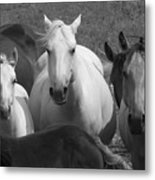 Horses In Black And White Metal Print