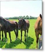 Horses In Bridgehampton Metal Print