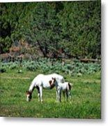 Horses In Meadow - California Metal Print