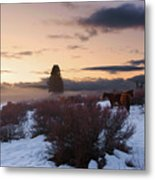 Horses In Snow At Sunset Metal Print