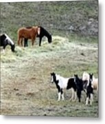 Horses In The Highlands Metal Print