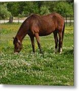 Horses In The Meadow 2 Metal Print