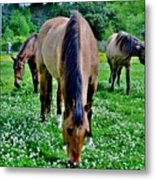 Horses In The Meadow Metal Print