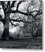 Horses On A Foggy Morning In Black And White Metal Print