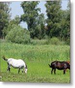 Horses On Pasture Nature Farm Scene Metal Print