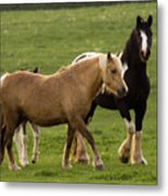 Horses Photography Metal Print