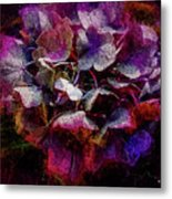 Colorful Hortensia Closeup Metal Print