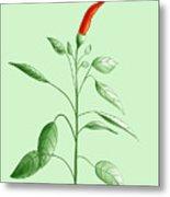 Hot Chili Pepper Plant Botanical Illustration Metal Print
