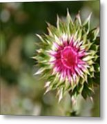 Hot Pink And Spikey Metal Print