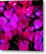 Hot Pink Florals Metal Print